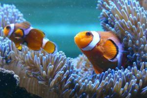 Nemo und wir